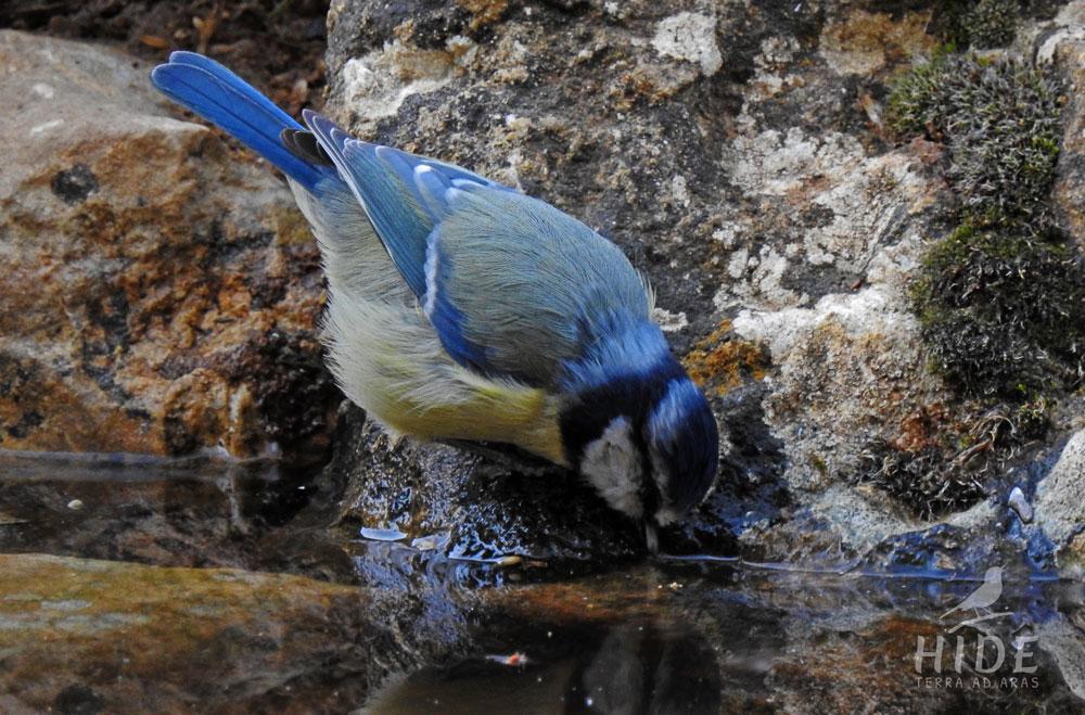 Turismo de naturaleza y ornitológico